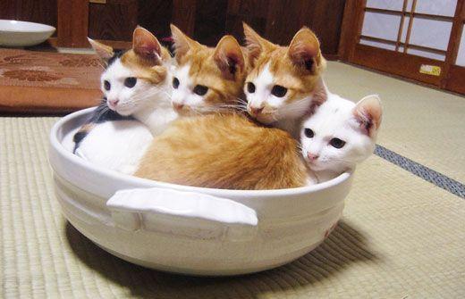 猫おもしろ44