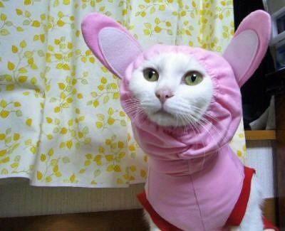 猫おもしろ47