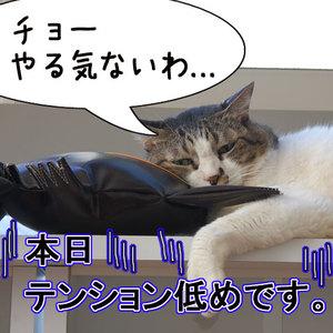 猫おもしろ53