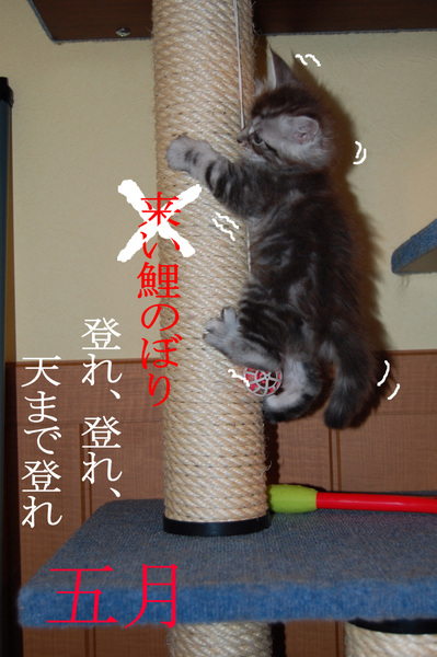 猫おもしろ6