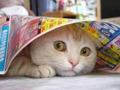 猫おもしろ62