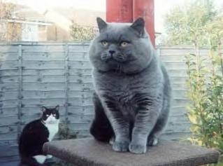 猫おもしろ68