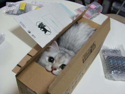 猫おもしろ91