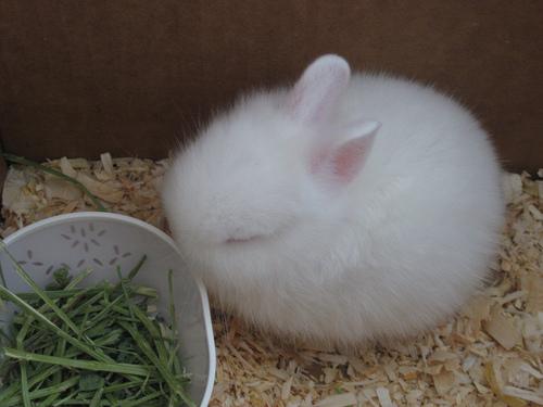 子ウサギ10