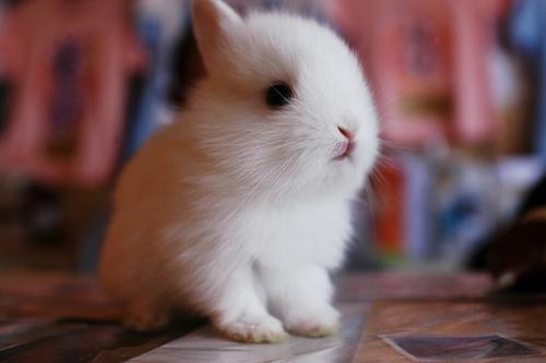 子ウサギ11