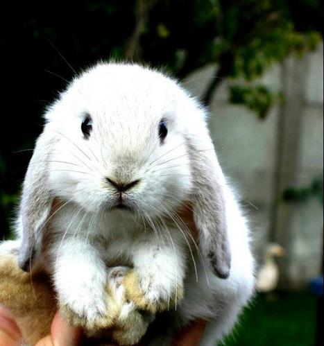 子ウサギ12