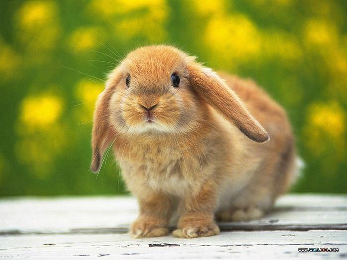 子ウサギ14