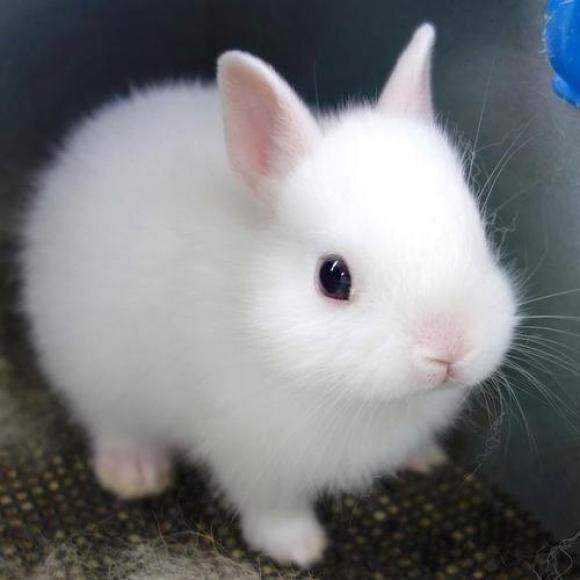 子ウサギ16