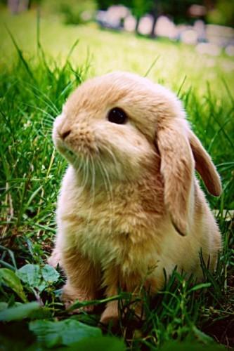 子ウサギ17