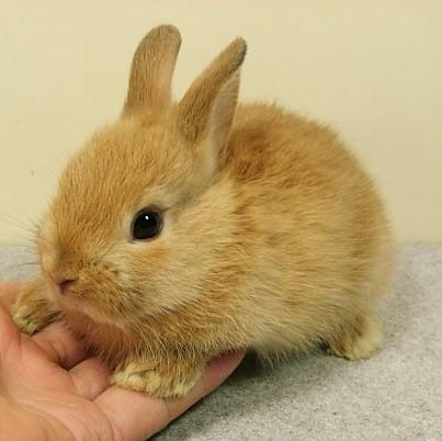 子ウサギ2