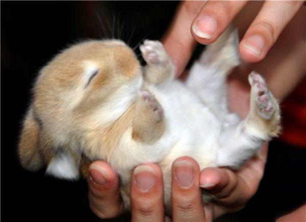 子ウサギ20