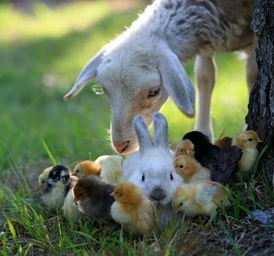 子ウサギ22