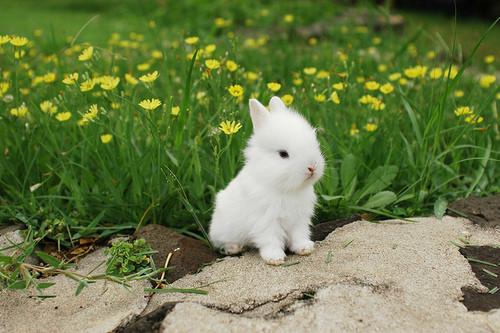 子ウサギ23