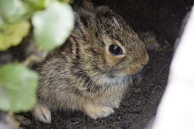 子ウサギ24
