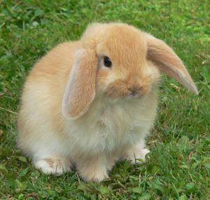 子ウサギ26