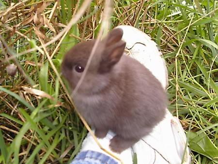子ウサギ27