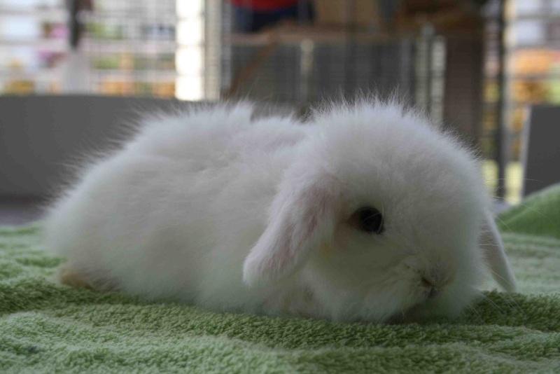 子ウサギ28