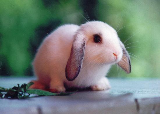 子ウサギ29
