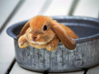 子ウサギ3