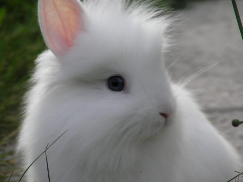 子ウサギ30