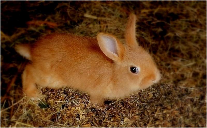 子ウサギ31