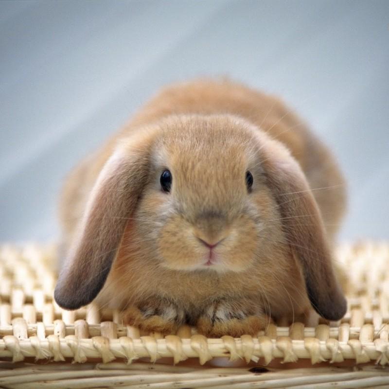 子ウサギ32