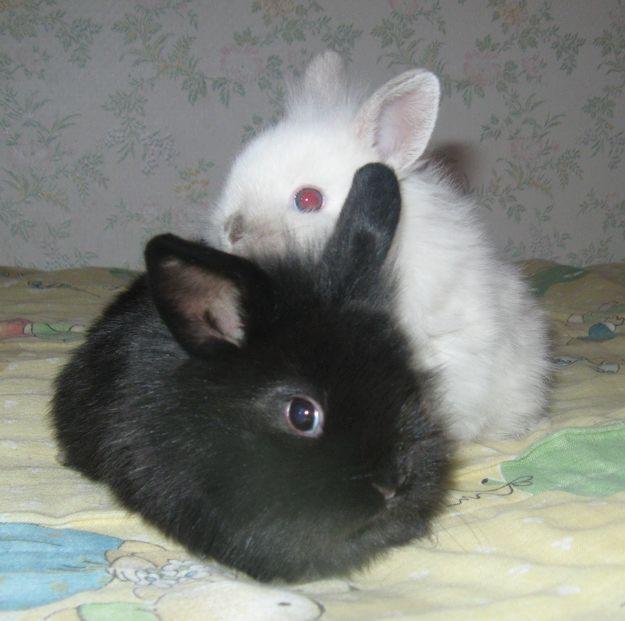 子ウサギ33
