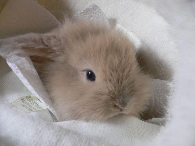 子ウサギ34