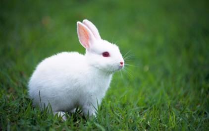 子ウサギ37