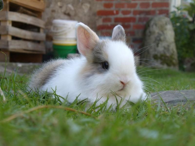 子ウサギ38