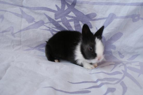 子ウサギ39