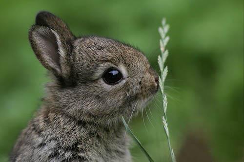 子ウサギ4