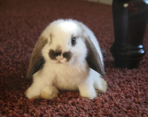 子ウサギ40