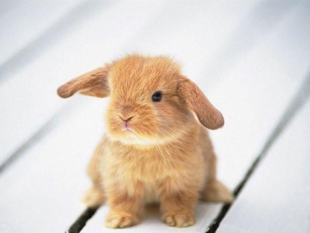 子ウサギ42