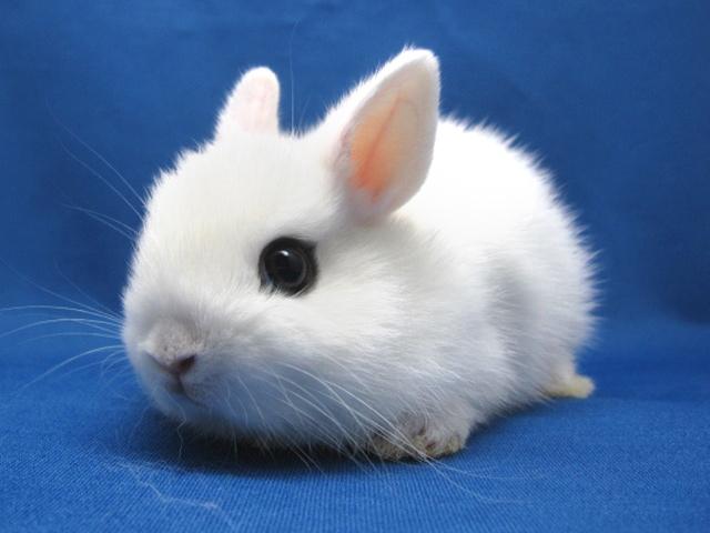 子ウサギ43