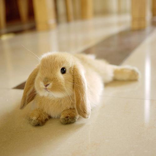 子ウサギ44