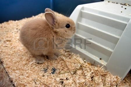 子ウサギ47