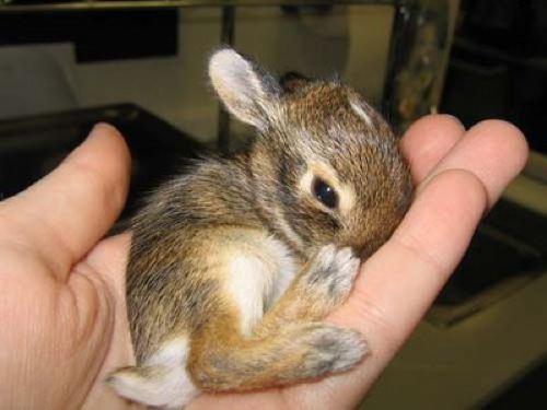 子ウサギ48