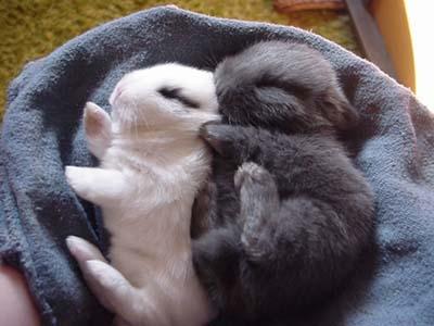 子ウサギ49