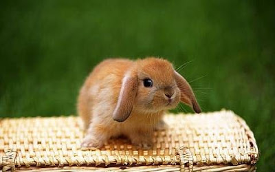 子ウサギ5