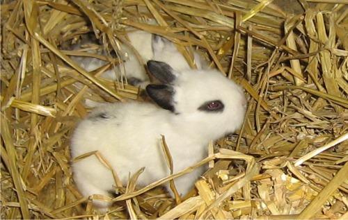 子ウサギ51