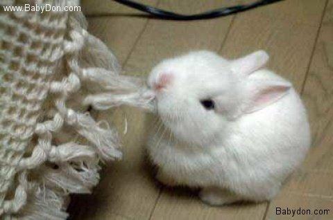 子ウサギ52