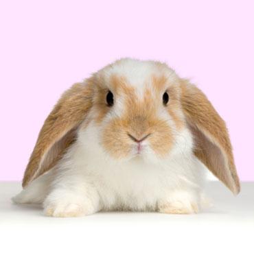 子ウサギ53