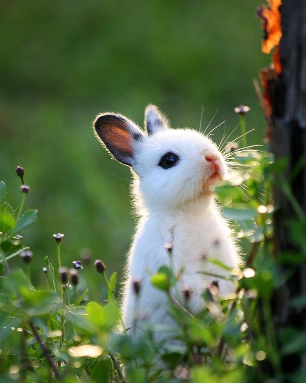 子ウサギ54