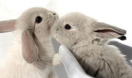 子ウサギ55