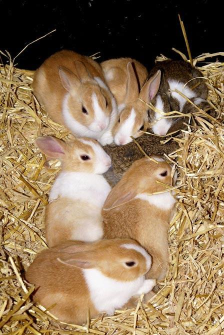 子ウサギ56