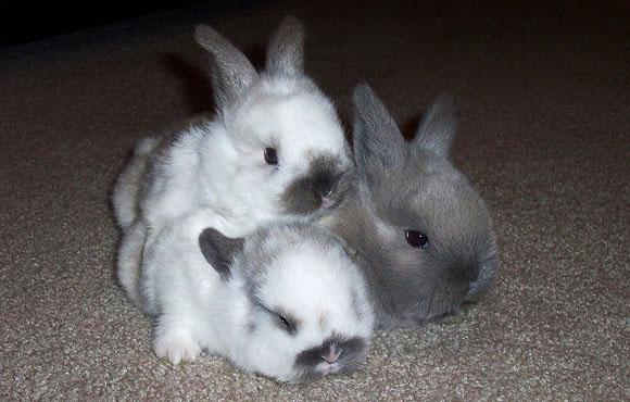 子ウサギ58