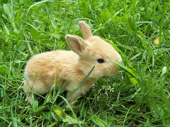 子ウサギ59