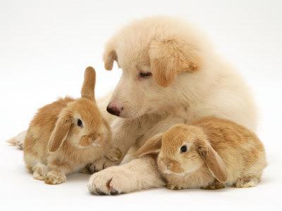 子ウサギ6