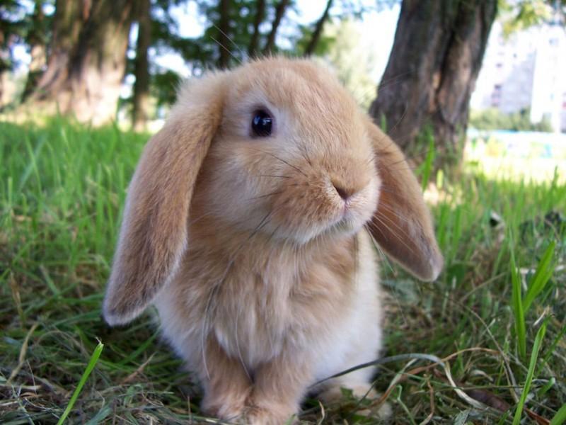子ウサギ60